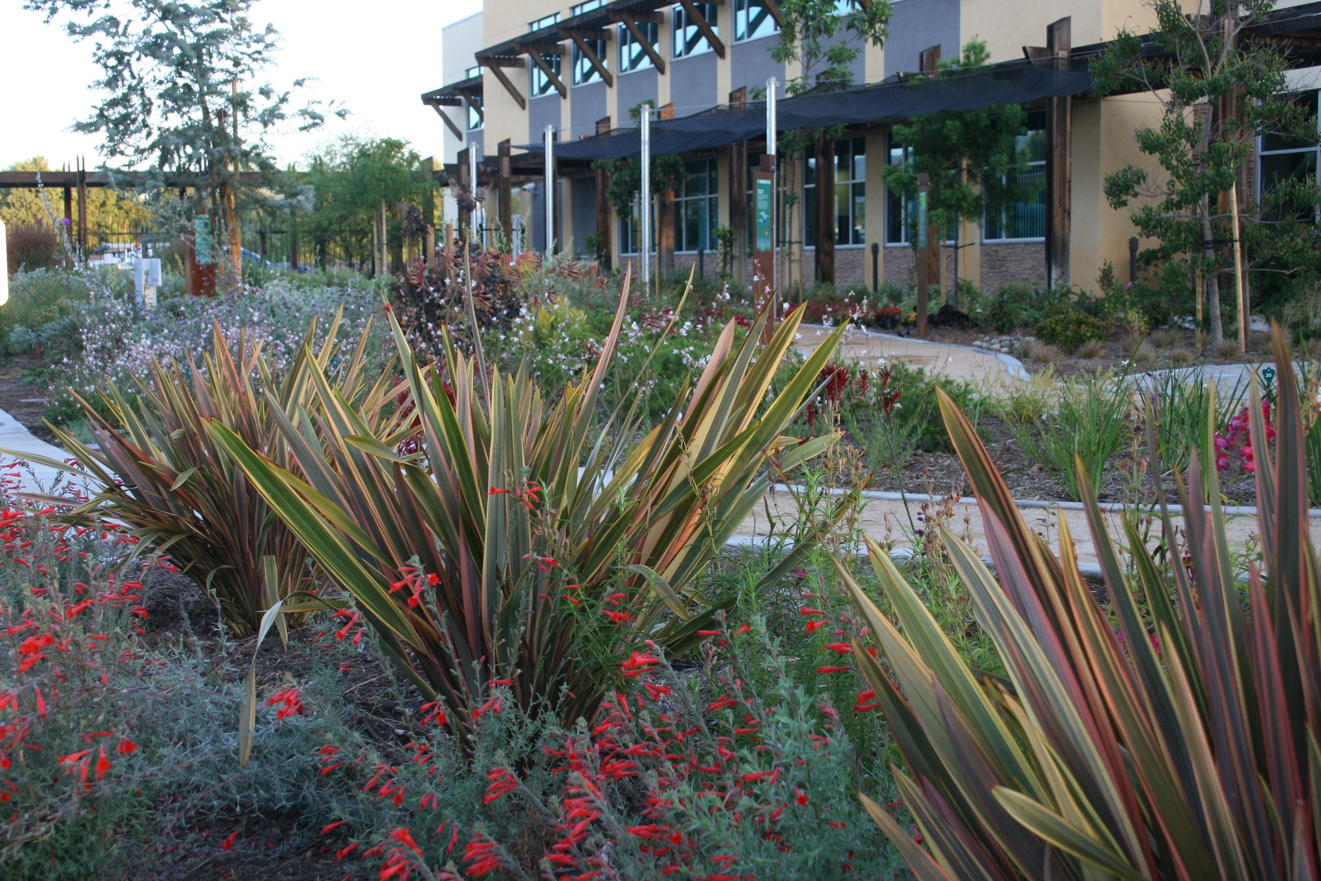 Image of plants in the Conservation Garden in front of building
